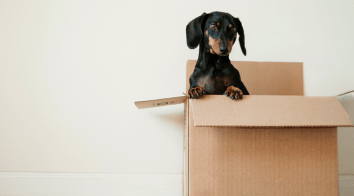 Packing Services in Hurst, TX